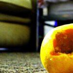 My Citrus Paradisiest Moment